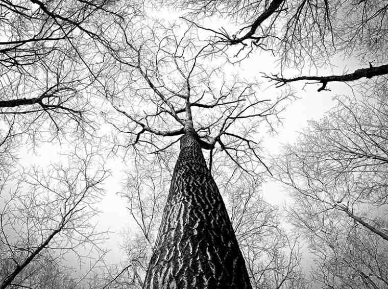 Zasaďte strom