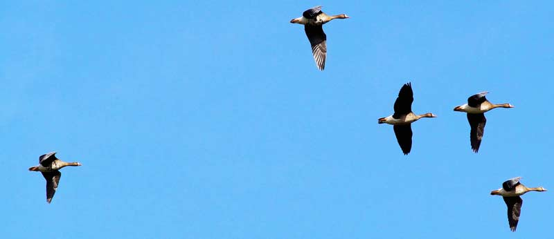 Niektoré vtáky odlietajú do tepla
